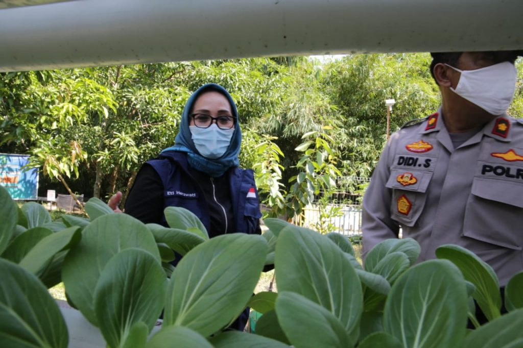 Pemda Kota Cirebon Dorong Masyarakat Manfaatkan Lahan Kosong untuk Pertanian