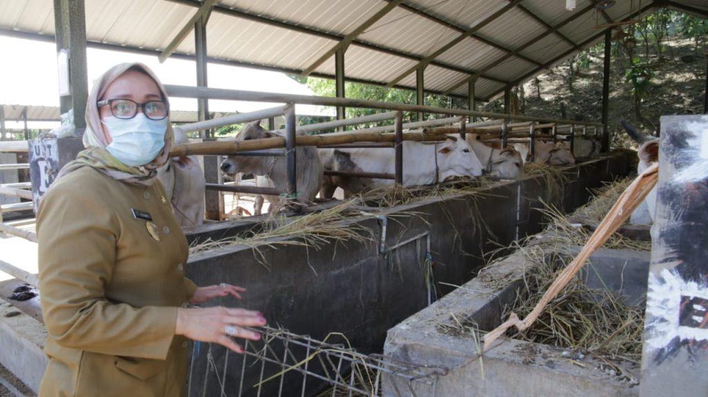 Pemda Kota Cirebon Kembangkan Benih Ternak Potong dan Tanaman Pangan Berkualitas